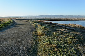 Palo Alto Baylands February 2013 013.jpg