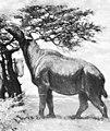 Paraceratherium C Knight.jpg