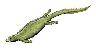 Ladinian - Paraplacodus