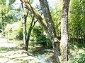 Parc oriental de Maulévrier -2015a.JPG