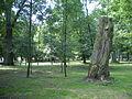 Park przy zamku Uniejów.JPG