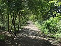 Parkland Walk - geograph.org.uk - 1586957.jpg