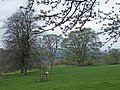 Parkland below Chipchase Castle - geograph.org.uk - 1255530.jpg