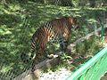 Parque Zoologico de Caricuao 2000 023.JPG