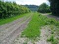 Part of a 6 furlong uphill gallop - geograph.org.uk - 814939.jpg