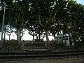 Passeig de Mar P1390570.JPG