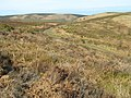 Path onto Black Hill - geograph.org.uk - 1766896.jpg