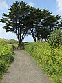 Path to Croyde Beach - geograph.org.uk - 1325511.jpg