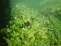 """Paysage subaquatique Subaquatic landscape rivière """"Les Baillons"""" à Enquin-sur-Baillons F Lamiot 15.jpg"""