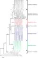 PeerJ 2233 - Pseudorhabdosynochus sulamericanus - fig-1.png