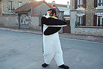 Penguin in urban environment.jpg
