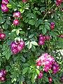 Perennial Blue.jpg