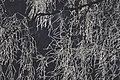 PermaLiv Byvegen-Overnvegen-vinter-trær 29-01-21 9.jpg