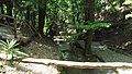 Petaloudes - water ^ trees - panoramio.jpg