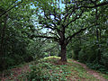 Pflaum-McWilliams Mound Group.jpg