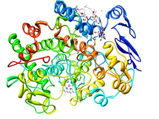 PTGS1 mammalian protein found in Homo sapiens