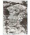 Photo of Panaramitee Crocodile Petroglyph - 1929.jpg