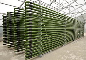 Algae fuel - Photobioreactor from glass tubes