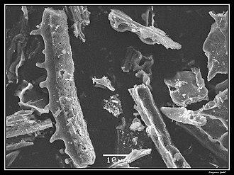 Phytolith - Image: Phytolithes observés au Microscope Electronique à Balayage 03
