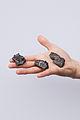 Pieces of Sikhote-Alin meteorite.jpg