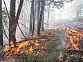 Pino Fire Santa Fe National Forest (21834300109).jpg