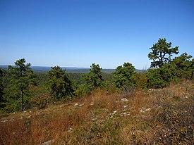 Pinus rigida Kittatinny Mountain.jpg