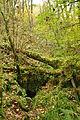 Plymbridge Woods north of Cann Viaduct (1518).jpg