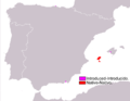 Podarcis pityusensis range Map.png