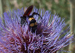 Polinização pollination.JPG