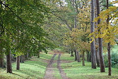 Pope's Meadow, High Town, Luton - avenue of trees, November 2013.JPG