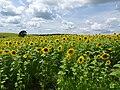 Pope Farm Conservancy - panoramio - Corey Coyle (8).jpg
