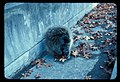 Porcupine (161fb3b72d9449dd99c1703e383fd829).jpg