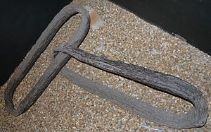 Fortifications of Portsmouth - The pair of links from one of the harbour boom chains that is on display at Southsea Castle