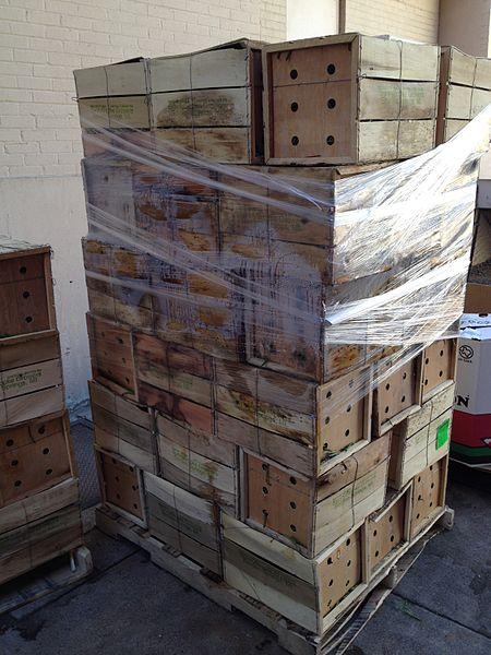 File:Pre-consumer Food Waste.JPG