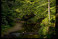 Prince William Forest Park PRWI9711.jpg