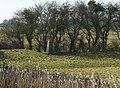 Priory Farm Triangulation Pillar - geograph.org.uk - 139062.jpg
