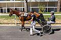 Prix de la Fédération Sud-Ouest 2016 - Toulouse La Cépière, trot attelé 8978.jpg