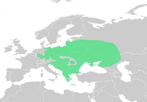 European green toad - Image: Pseudepidalea viridis dis