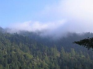 Purisima Creek Redwoods Open Space Preserve - Image: Purisima Creek vista