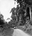 Queensland State Archives 1261 Gillies Highway scenic highway from Cairns to Atherton c 1935.png