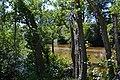 Río Alberche entre árboles.jpg