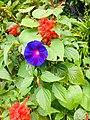 Radiant flower garden.jpg