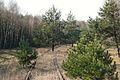 Railway line Drawski Mlyn Bzowo Goraj.JPG