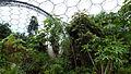 Rainforest Biome @ Eden Project (9757272612).jpg