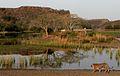 Ranthambhore Tiger park.jpg