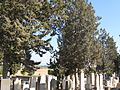 Rehovot Old Cemetery10-2013.JPG