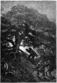 Reid-Aventures-Terre-Mer-d187.png