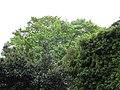 Remparts de Beaune 064.jpg