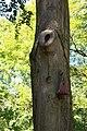 Rhododendronpark Bremen 20090513 077.JPG