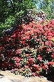 Rhododendronpark Bremen 20090513 108.JPG
